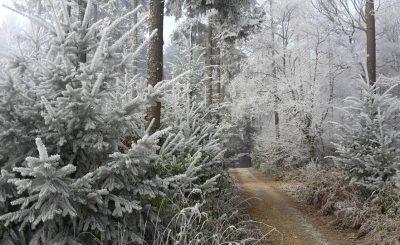 Rheinburgenweg im Winter