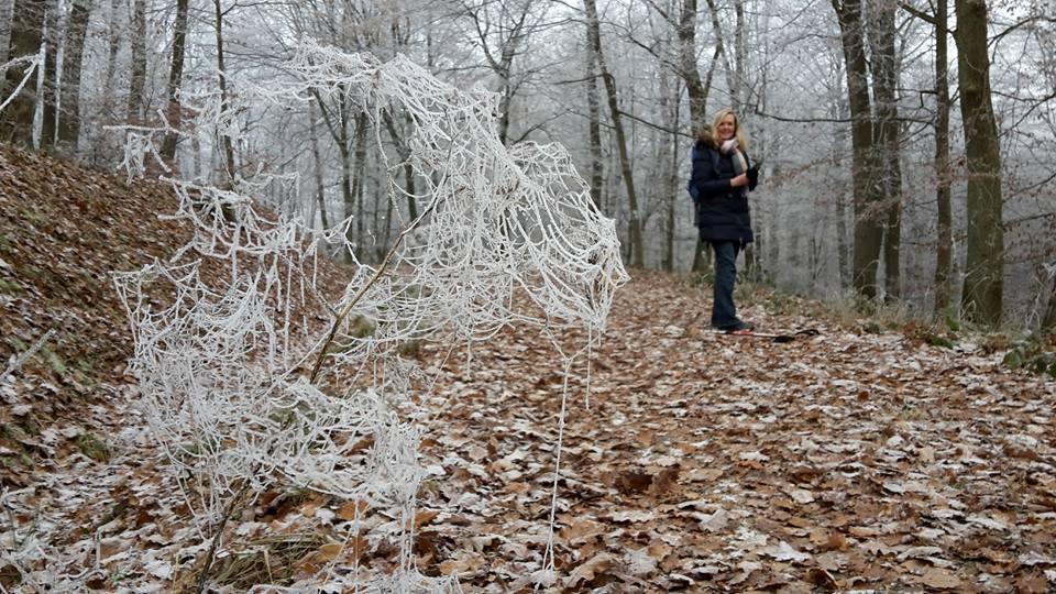 Vereistes Spinnennetz am Wegesrand bei der Rheinburgenweg Etappe 7