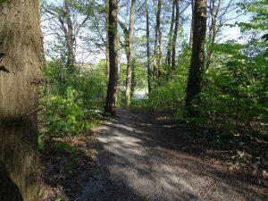 Start der Hermannsweg Etappe 2: Aufstieg zum Huckberg