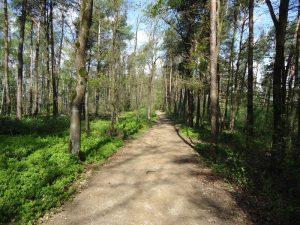 Hermannsweg Etappe 2