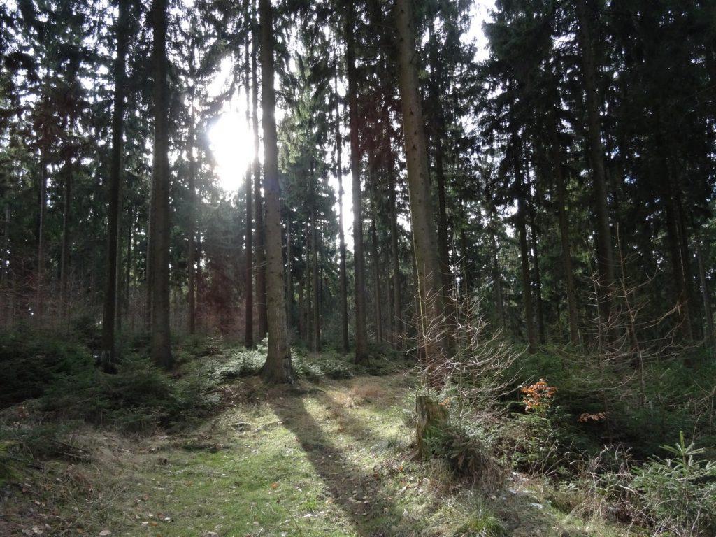 Bäume mit Sonneneinstrahlung