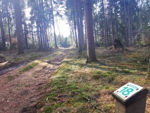 Infoschild auf dem Waldlehrpfad Dammer Berge