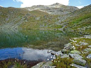 Wollgras an den Gritzer Seen