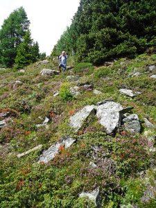 Den besonderen Reiz der Rücktour vom Gritzer Hörndl macht die sprießende Vegetation aus.