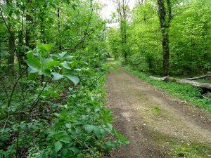 Waldweg bei Gellenbeck