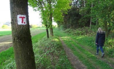 Weg zwischen Waldrand und Feld