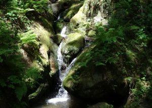 Licht und Wasser erzeugen mitunter unwirklich erscheinendes Ambiente.