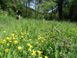 Zwischen Bahnschienen und Blumenwiese führt uns der Malerweg weiter.