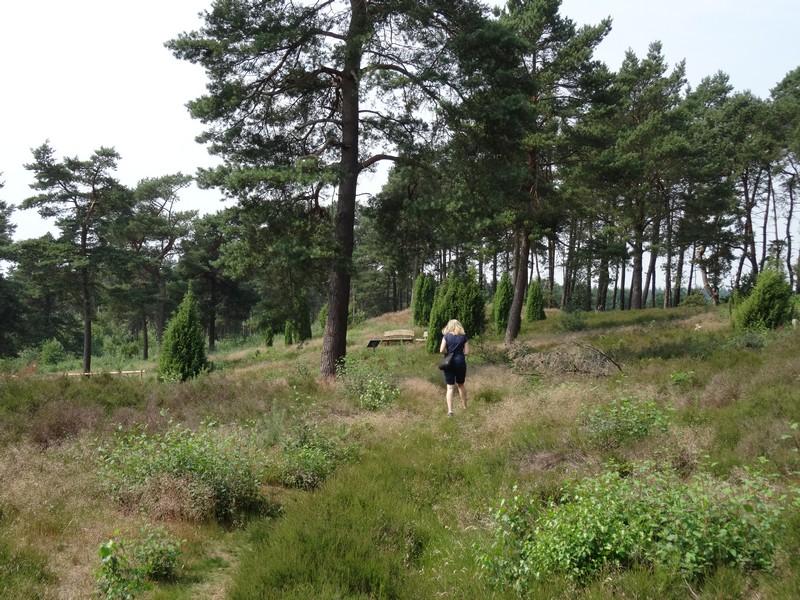 Der schmale Erlebnispfad führt uns einmal durch den Wacholderhain Merzen.