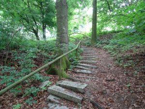Vom Wanderparkplatz Lorenkamp führen Stufen hinab zum Rundwanderweg.