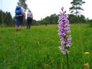 Wir erreichen die Orchideenwiese auf dem Silberberg in Hagen.