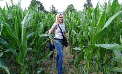 Mitten durch den Mais führt uns das Heckenpättken Westerberg.