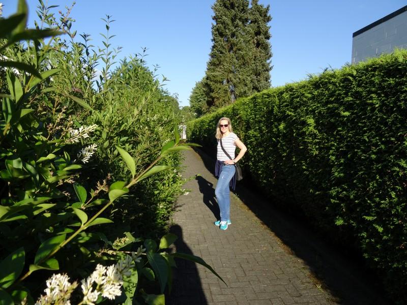 Ab durch die Hecke! Unser Weg wird links und rechts häufig gesäumt von grünen Gartenbegrenzungen.