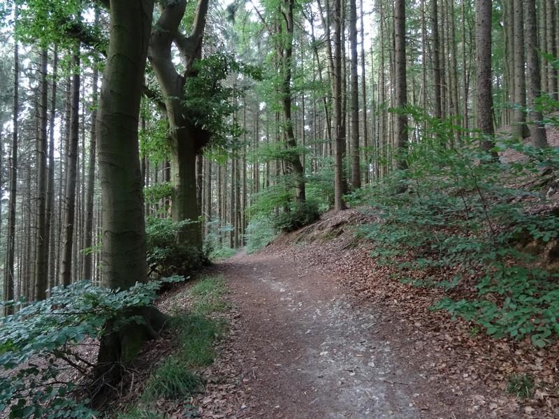 Ein letztes Mal geht es noch in den Wald...