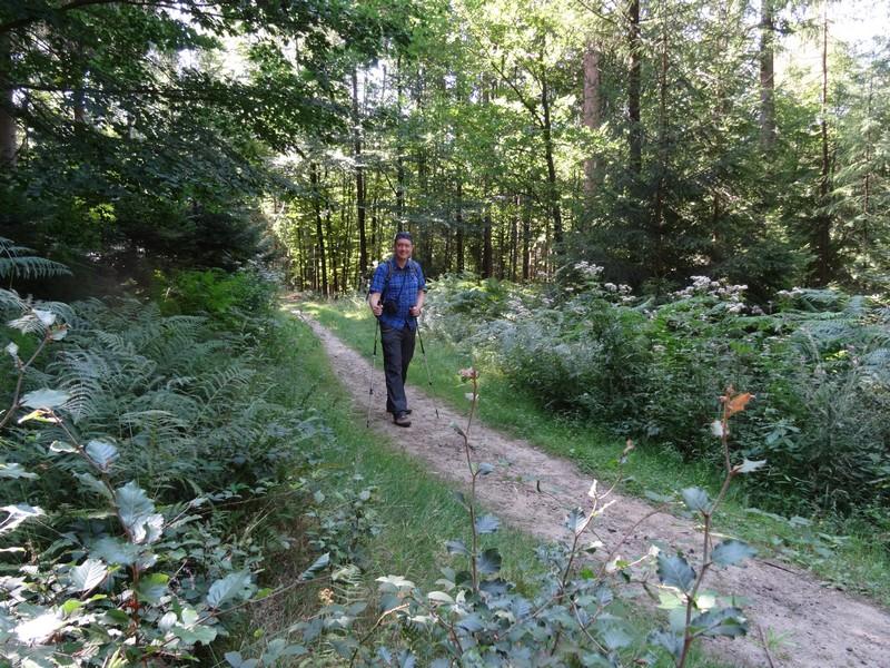 Unsere Wanderung auf dem TERRA.track Musenberg startet mit schmalen Waldpfaden.