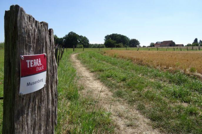 Schmale Wege zwischen Feldern und Weiden bestimmen das Bild.