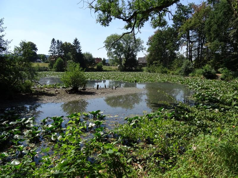Auch am Mühlenteich ist der trockene Sommer 2018 nicht spurlos vorüber gegangen.