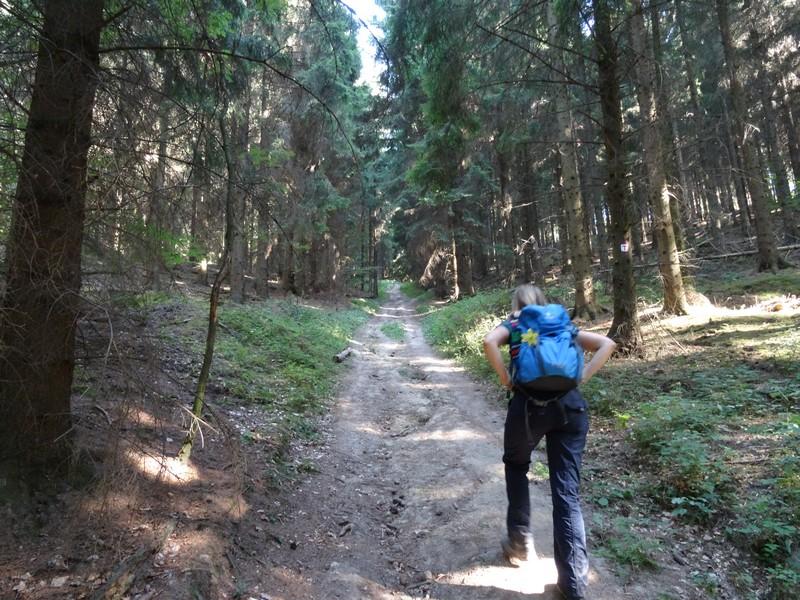 Ein steiler Anstieg über breite Forstwege schließt sich an.