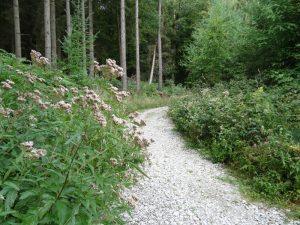 Kalkreicher Grund bestimmt heute das Bild unserer Wanderung auf dem TERRA.track Kalksteinklippe.