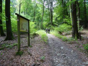 Mehrere Info-Tafeln am Wegesrand geben Auskunft über Flora und Fauna.