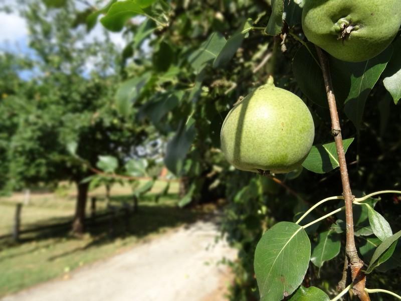 Vorbei an Apfelbäumen führt uns der Naturpfad Blüsenpatt zu Beginn.