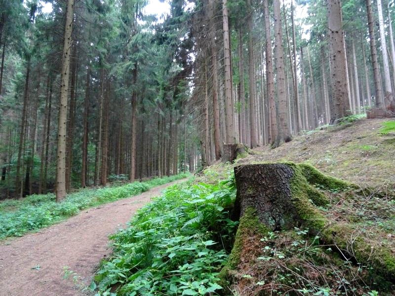 Zunächst geht es auf beschaulichen Waldwegen nur langsam bergauf.