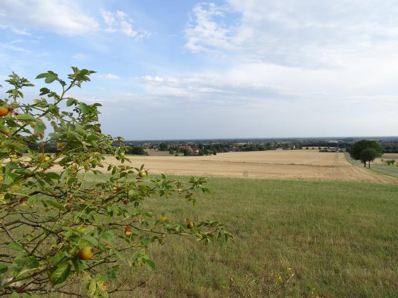 Einen tollen Panoramablick über Dissen haben wir vom Pilzweg.