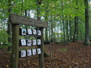 Welche Baumarten wir unterwegs antreffen werden, erfahren wir schon auf dem Weg zu den Sloopsteinen.