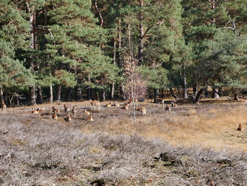Noch mehr vierbeinige Landschaftspfleger können wir hier entdecken.
