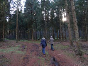...teils auf offenkundig rege genutzten Forstwegen.