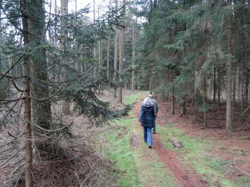 Teils verläuft die Strecke auf sehr schönen, schmalen Waldpfaden...