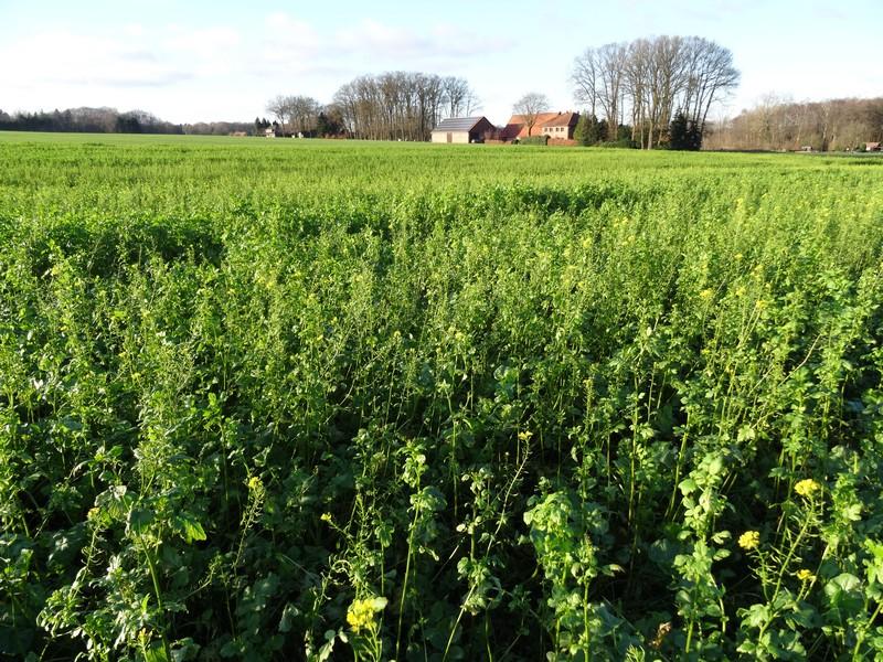 Ein kleines Teilstück verläuft entlang von Feldern und am Waldrand.