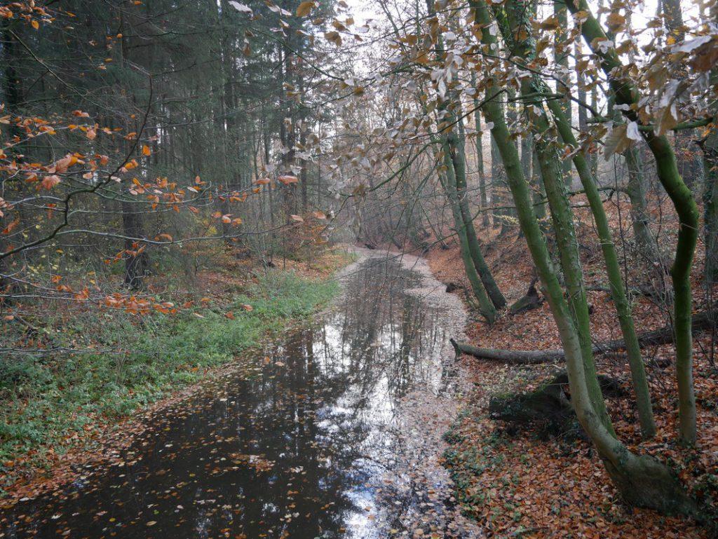 Ein recht breites Flussbett hat die Wierau hier bereits.