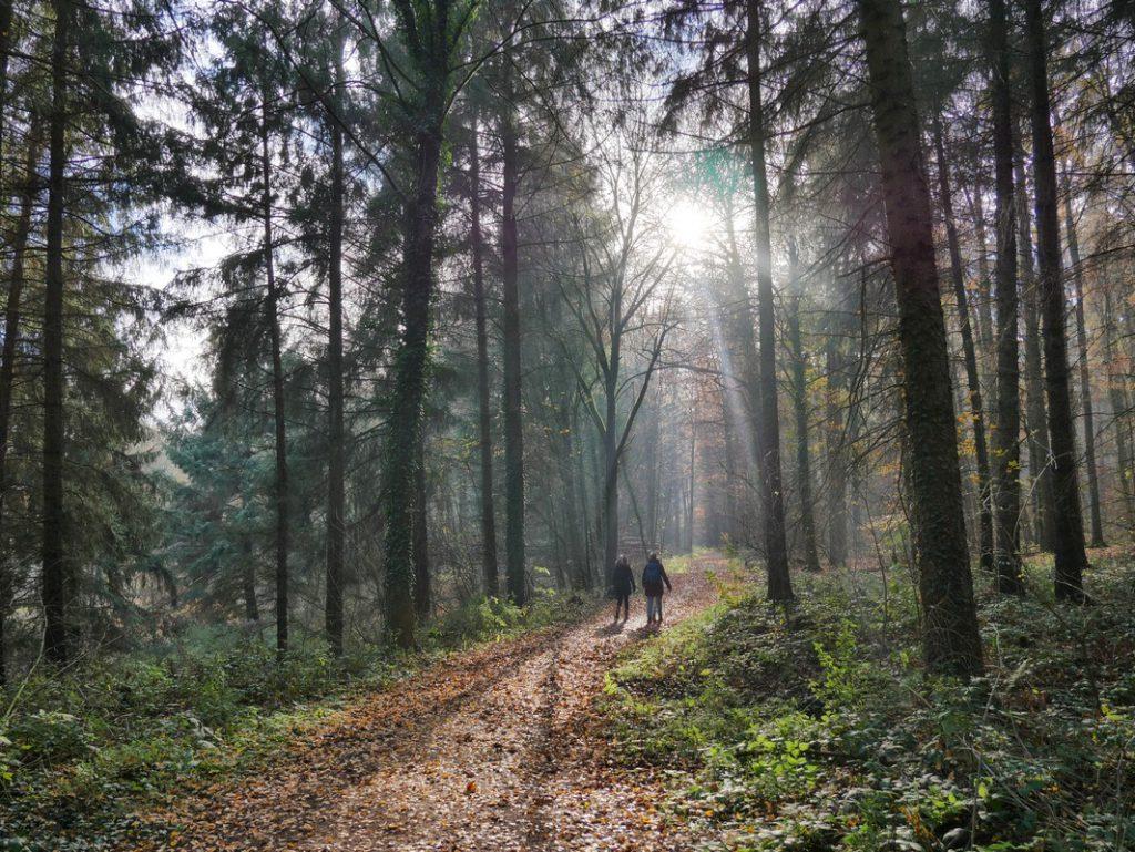 Nach dem Flussabschnitt geht es für uns auf dem TERRA.track Schelenburg und Wierau in den Wald.