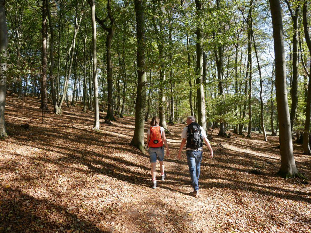 Wanderer auf einem breiten Wanderweg auf dem TERRA.track Malepartus