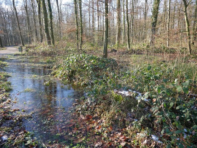 Wasserfläche am Wegesrand
