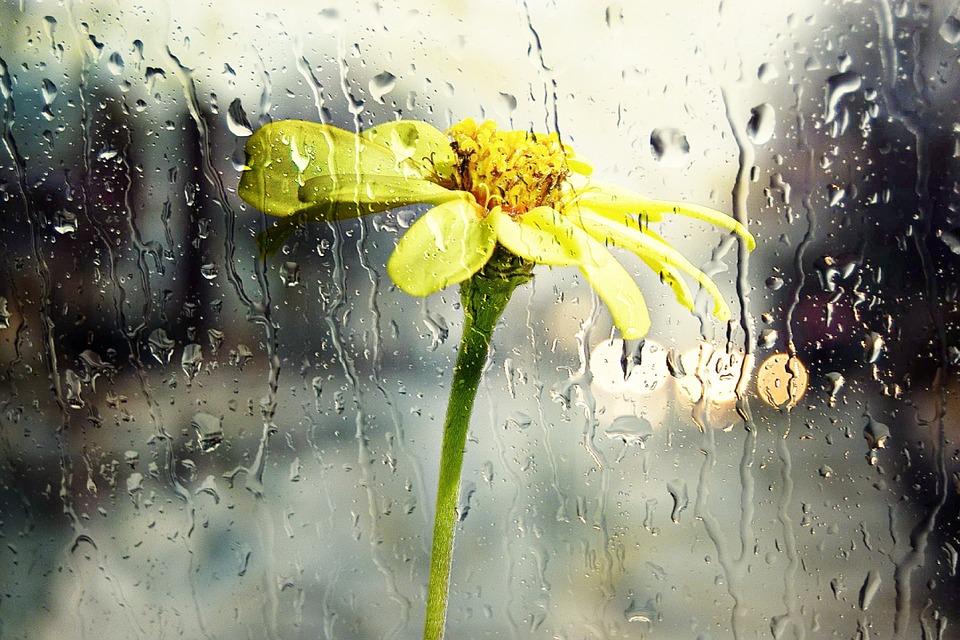 Fenster mit Regentropfen, dahinter eine Blume