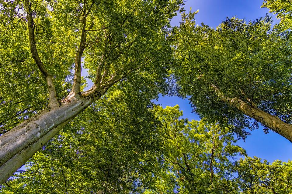 Grüne Baumwipfel