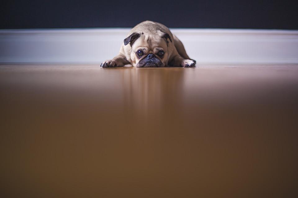 Trauriger Hund auf Fußboden