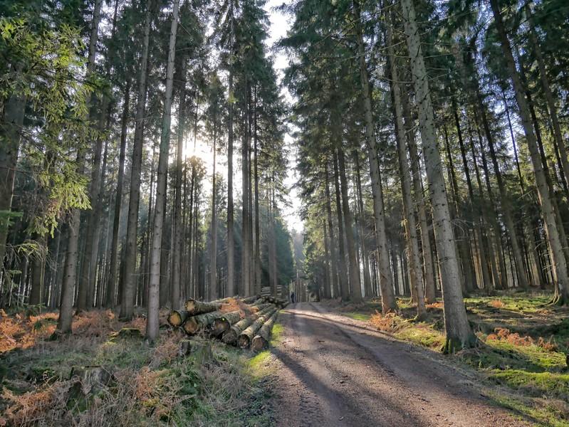 Breiter Waldweg mit lichtdurchfluteten Baumwipfeln