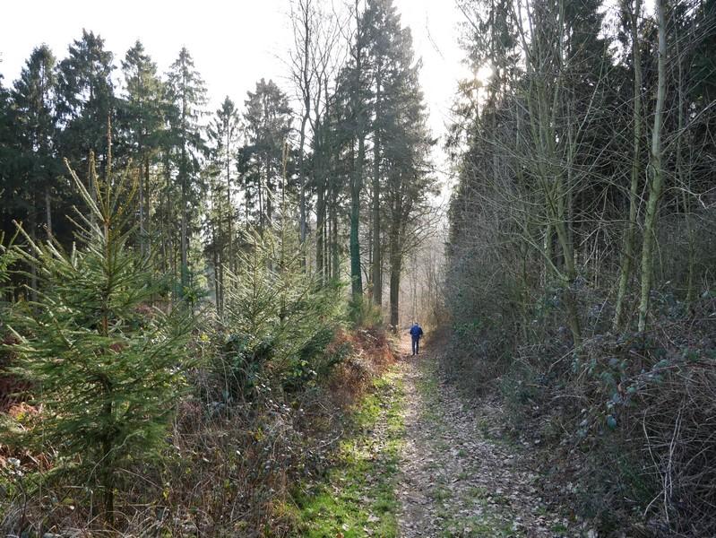 Wanderer auf Waldweg