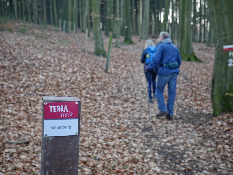 Die rot-weißen Markierungen des TERRA.track Kellenberg geleiten uns sicher. Rechts im Bild die rotweiße Markierung des Wittekindsweges.