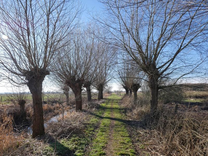 Ein langer, schnurgerade Weg führt uns anschließend in das Ochsenmoor.