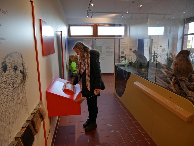 Blick in die Ausstellungsräume der Naturschutz-Station Dümmer-See