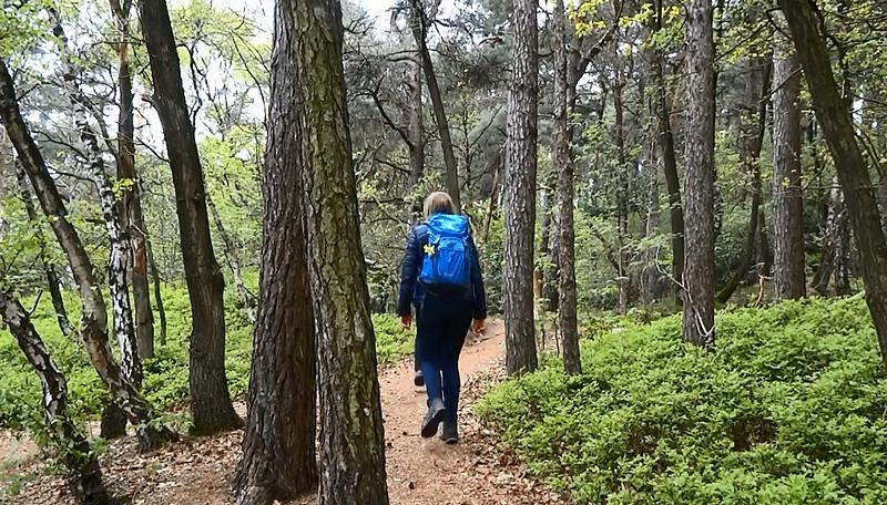 Wanderer auf einem Waldweg der Teutoschleife Waldauenweg