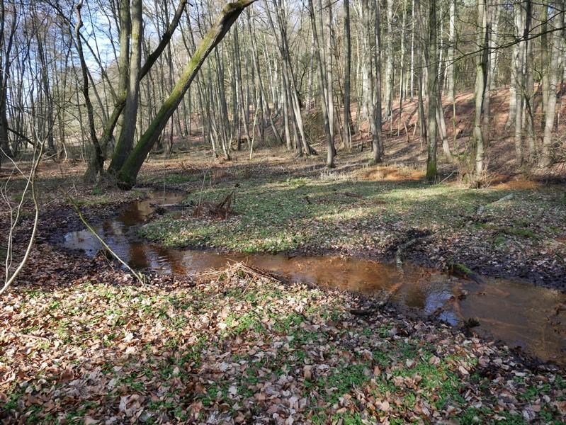 Kleine Bäche durchfließen das Unterholz am Rande unseres Wanderweges durch das Bexaddetal.
