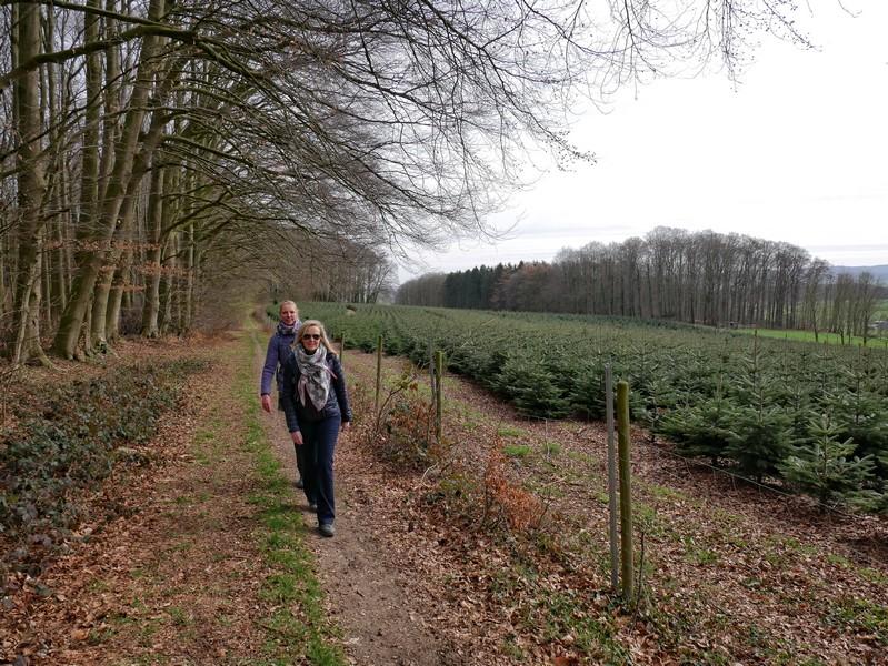 Wanderer auf dem TERRA.track Holter Berg neben einer Tannenbaumaufzucht