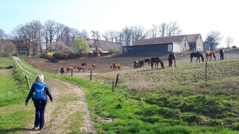 Das Bild zeigt Meike auf dem TERRA track Königsbrück. Rechts sind mehrere Pferde zu sehen, im Hintergrund ein Bauernhof.