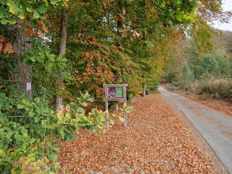 Das Bild zeigt einen breiten wanderweg. Links an einem Baum ist das Markierungszeichen des Wanderweges Drei Türme zu sehen.