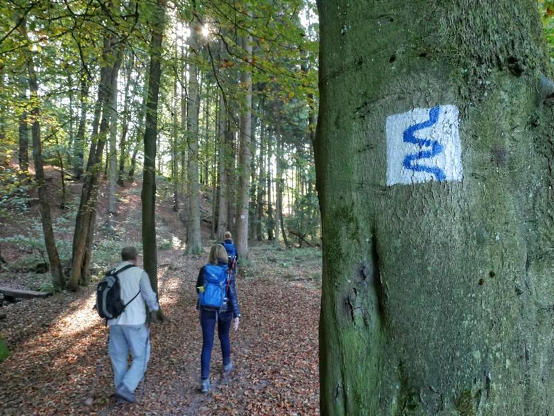das Bild zeigt die Wegmarkierung auf dem TERRA.track Naturerlebnispfad Zwickenbachtal.